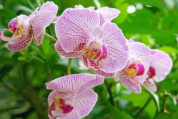 Planting and care of orchids